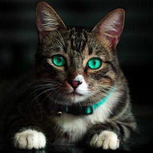 Dla kota - wszystko dla kota