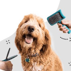 Sierść i skóra, preparaty na zdrowe stawy, zdrowie psa, probiotyki