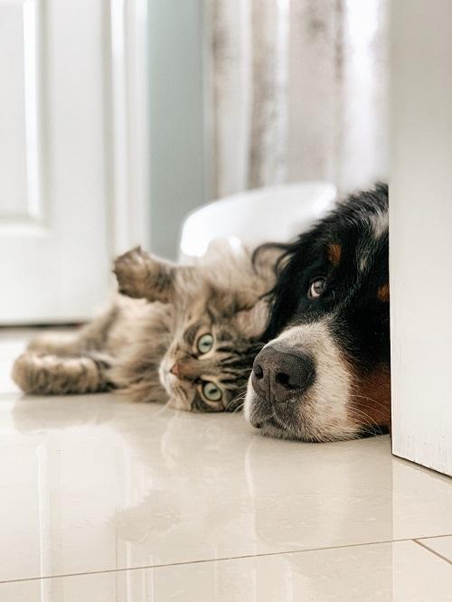 zdrowie psa, zdrowie kota