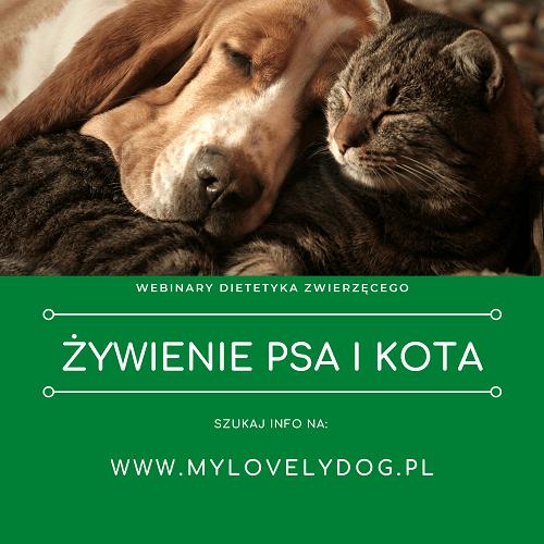 psi i koci ekspert