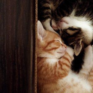 Karma i przysmaki dla kota- pyszne i zdrowe 🐈🐈